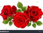 photo-rose2